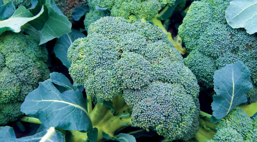 A picture of broccoli.