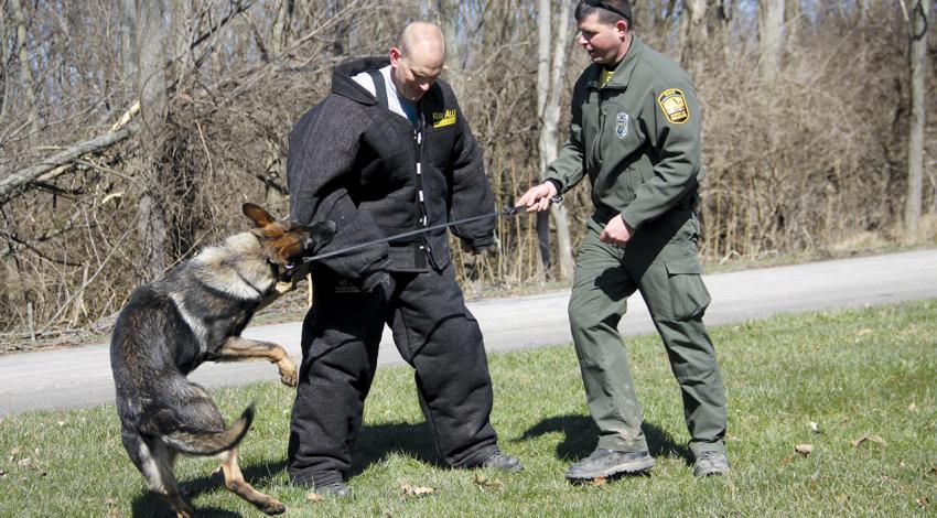 A K-9 officer trains with his officer by biting an officer in protective gear.