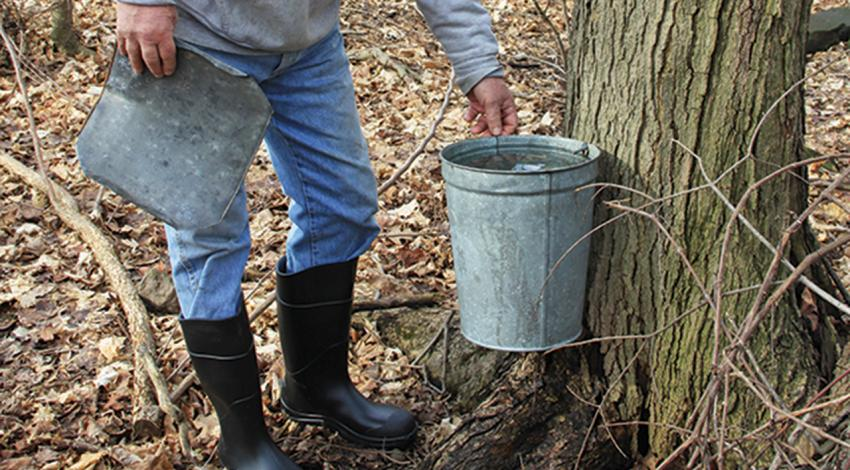 Gordon McDonald checks a sap bucket on his brother Gary's farm near Chardon.