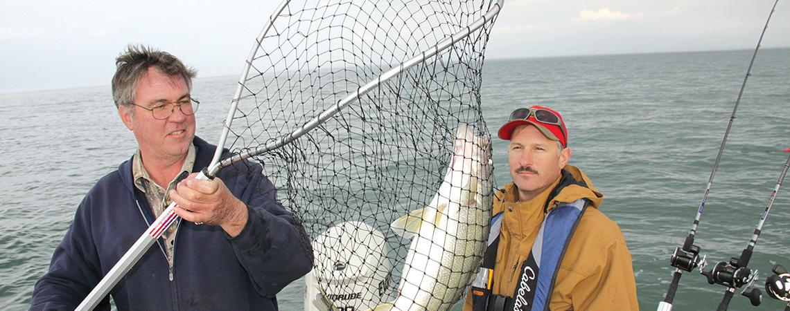 Man with walleye in net
